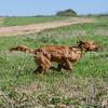 grca_puppy2012_0212