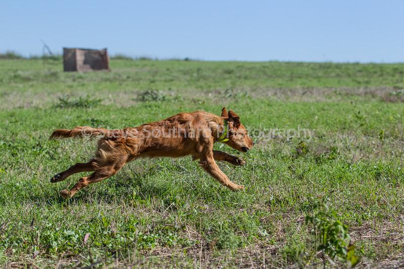 grca_puppy2012_0216
