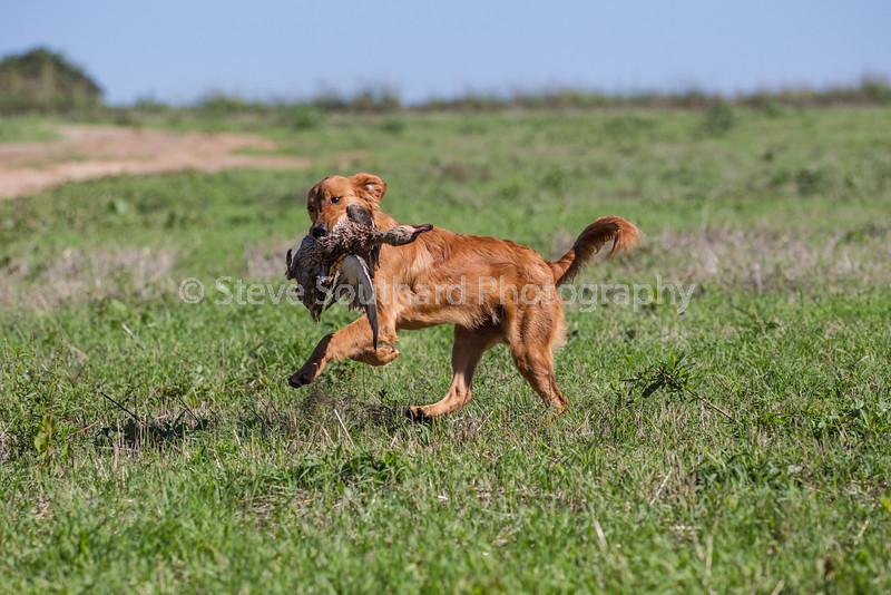 grca_puppy2012_0229