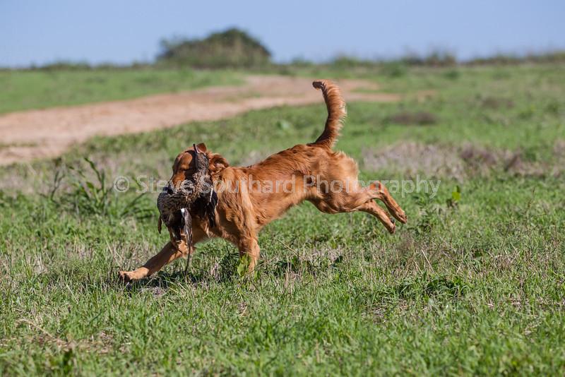 grca_puppy2012_0231