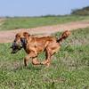 grca_puppy2012_0233