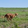 grca_puppy2012_0217