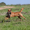grca_puppy2012_0230