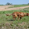 grca_puppy2012_0211