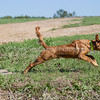 grca_puppy2012_0210