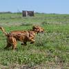 grca_puppy2012_0215
