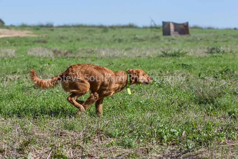 grca_puppy2012_0214