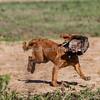 grca_puppy2012_0434