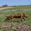 grca_puppy2012_0410