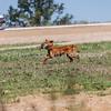 grca_puppy2012_0430