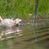 grca_puppy2012_1030
