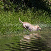 grca_puppy2012_1052