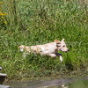 grca_puppy2012_1027