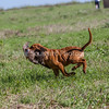 grca_puppy2012_0488