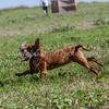grca_puppy2012_0487