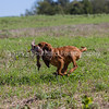 grca_puppy2012_0482