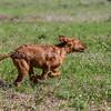 grca_puppy2012_0476