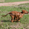 grca_puppy2012_0473