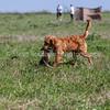 grca_puppy2012_0934