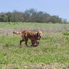 grca_puppy2012_0930