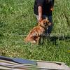 grca_puppy2012_1125
