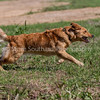 grca_puppy2012_0758