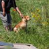 grca_puppy2012_1106