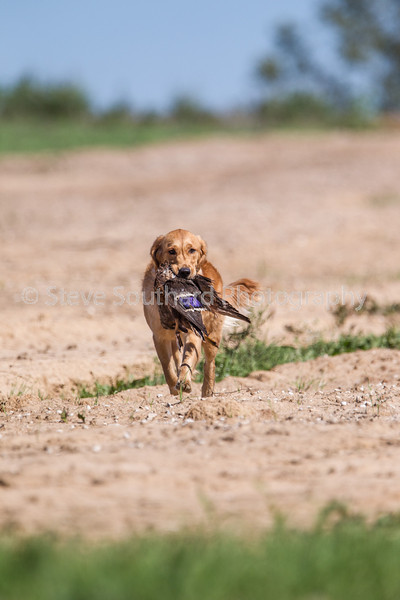 grca_puppy2012_0781