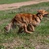 grca_puppy2012_0760