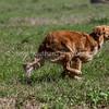 grca_puppy2012_0763