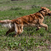 grca_puppy2012_0764