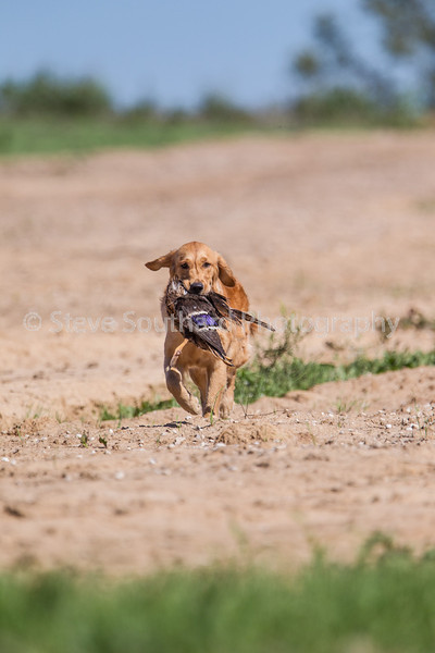 grca_puppy2012_0782