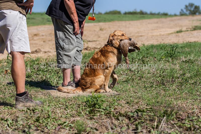 grca_puppy2012_0771