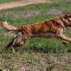 grca_puppy2012_0761