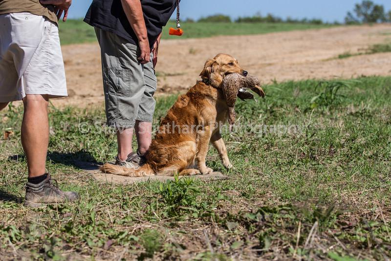 grca_puppy2012_0772