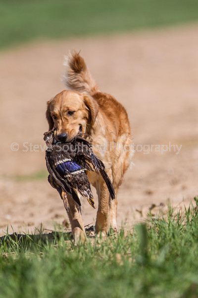 grca_puppy2012_0787