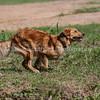 grca_puppy2012_0757