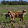 grca_puppy2012_0768