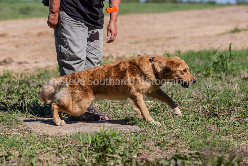 grca_puppy2012_0755