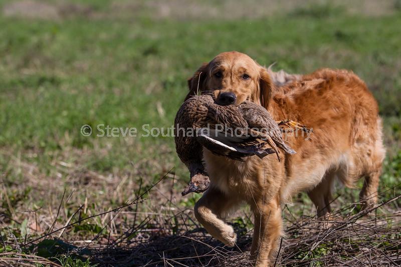 grca_puppy2012_0770
