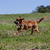 grca_puppy2012_0539