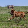 grca_puppy2012_0543