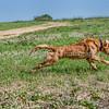 grca_puppy2012_0527