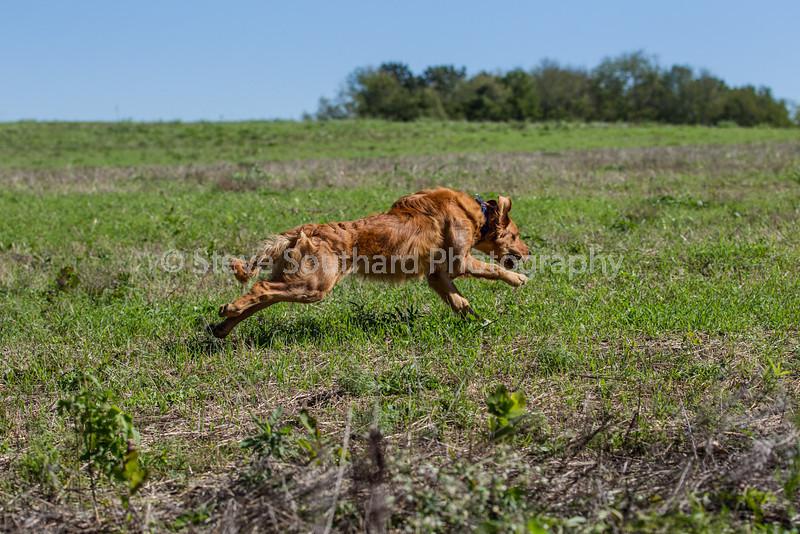 grca_puppy2012_0533