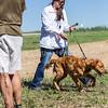 grca_puppy2012_0520