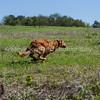 grca_puppy2012_0534