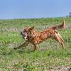 grca_puppy2012_0540