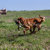 grca_puppy2012_0542