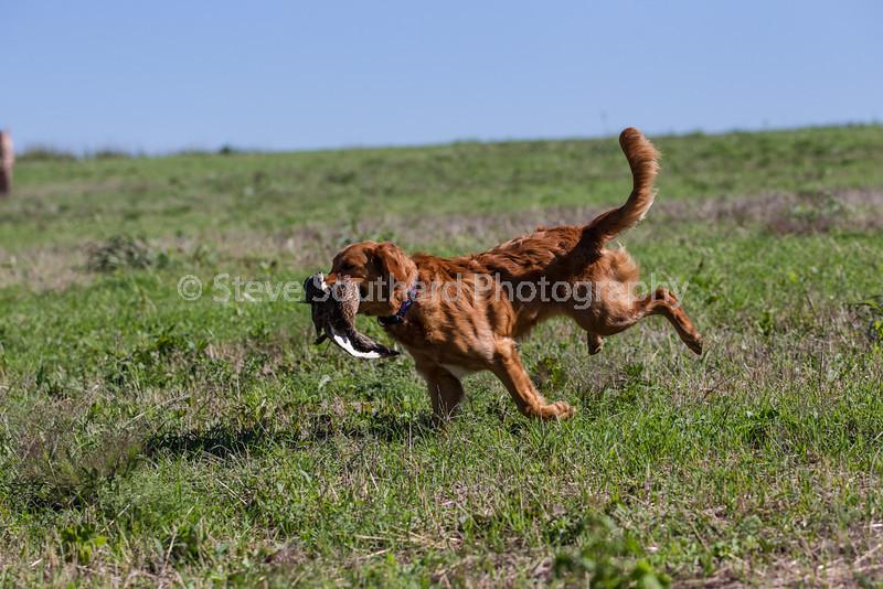 grca_puppy2012_0541