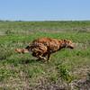 grca_puppy2012_0531